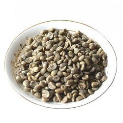 Café Arábica Feijão Yunnan Grãos de café com o preço de venda por grosso de café verde Feijão