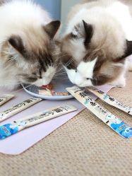 10g Cat Pouco Líquido Bolsa Cat Snacks alimentos húmidos