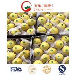 Super calidad fresca para la exportación de limón