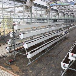 Galvanisiertes Stahlkonstruktion-Glasdeckel-Handelsgewächshaus verwendet, Gemüse mit gurrendem System pflanzend und Wasserkultur