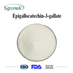 Natürliches Antipolyphenol-Puder-Qualität Epigallocatechin 3 aushärtungs-grüner Tee-Auszug-Puder CAS-989-51-5 EGCG Gallat MassenEpigallocatechin 3 Gallat