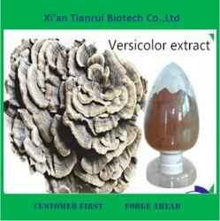 Poudre organique d'extrait de Coriolus versicolor de qualité