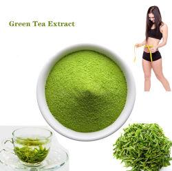 Fabricante suministra el 99% Puro de extracto de té verde