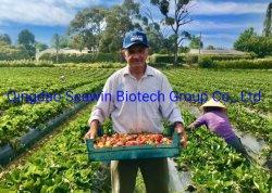 海藻ボロン PRO 農業有機肥料、正しいボロン欠乏