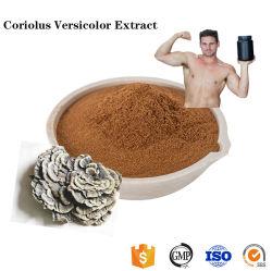 Naturelles de plantes Coriolus versicolor Extrait de la poudre d'alimentation
