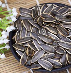 いろいろな種類の人々のための卸し売り未加工殻から取り出されたヒマワリの種