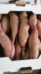 Frais de la Patate douce de la Chine de haute qualité des aliments sains