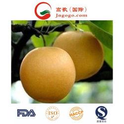 La Chine nouvelle récolte de Fengshui Pear pour l'exportation