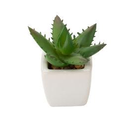 I POT succulenti di ceramica bianchi brillanti di disegno dell'interno hanno personalizzato la piantatrice