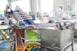 Frucht-u. Nahrungsmittelwaschen/Einwachsen/Ordnen//Processing-Maschine sortierend