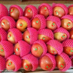 Colore dentellare rosso insaccato plastica del Apple FUJI della frutta fresca