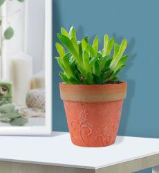 Preço fabricante moderno estilo nórdico Mathilda decorativos de alta qualidade pote de flores de plástico Plantadeira Jardim do Potenciômetro da fábrica