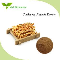 SGS van ISO verklaarde het Natuurlijke Uittreksel Sinensis van Polysacchariden 10%-40%/Cordyceps voor Tegen kanker