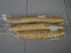 Neues Getreide/hochwertiger/konkurrenzfähiger Preis/frische Yamswurzel (35cm und up)