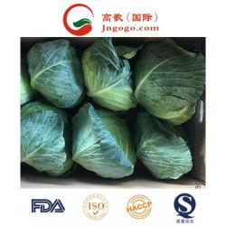 China-neues Getreide-frischer Grünkohl-Gesundheits-Gemüse-Lieferant
