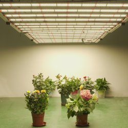 مؤشر LED كامل الطيف ينمو الضوء بار لوحة نمو النباتات الزهرة مصابيح زراعة مصنع الدفيئة للأحياء المائية