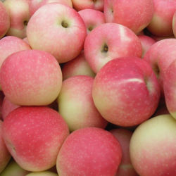 Vers papier verpakt in rood Gala Apple fruit