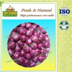 Esporta cipolla rossa Crop nuova con il prezzo più basso