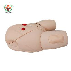 Nurse Training를 위한 Sy-N045 Medical Human Female Catheterization Model