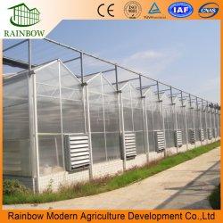 La serra commerciale di Eco del giardino dello strato del policarbonato con la coltura idroponica Cocopeat che pianta il sistema LED coltiva la lega di alluminio chiara del sistema per il pollame di agricoltura