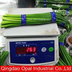 Haste de alho chinês de produtos hortícolas frescos