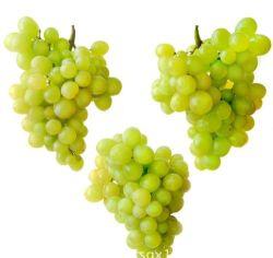 La nouvelle récolte de haute qualité pour l'exportation de raisin vert frais