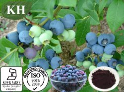 Извлеките, Anthocyanidins Bilberry15%-35%, Anthocyanins 15%-35%