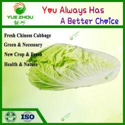 La col fresca procedente de China con alta calidad