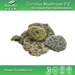 Rainbow Conk extrait (20 % polysaccharide~50 %)