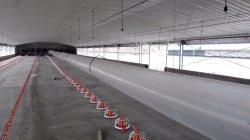 Automatische Geflügelhäuser mit Ventilationsventilatoren