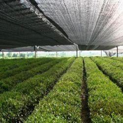 La sombrilla de efecto invernadero vegetal Net para la venta