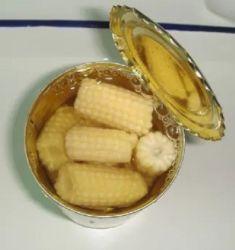 Cultura fresca de excelente qualidade para conservas de milho doce do bebé