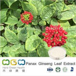 Niedriger Pestizid Rückstand Natürliche Pflanzenextrakt Panax Ginseng Blatt-Extrakt Mit Ginsenosid 45% HPLC / 80% UV Kräuter Kräutertee
