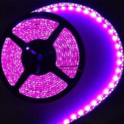 Fio de cobre de LED luzes de cadeia por rolo
