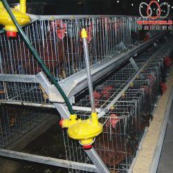 Зимбабве птицы дома 4 яруса тип заводчика каркас для плат и птицы клеток с автоматический сбор яиц машины