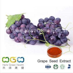 Extrait de plante naturelle de la poudre de pépins de raisin pour la santé des femmes et antivieillissement Herb Herbal
