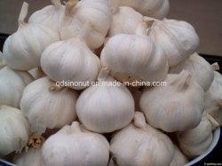 Ajo fresco blanco normal chino 5cm.