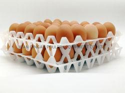 Dienblad 30 van het Ei van de Kip van het Dienblad van het Vervoer van de verpakking Plastic de Prijs van het Dienblad van het Ei van Gaten