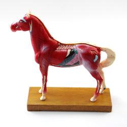 حصان نموذج من الحيوانات ذي جودة عالية (M-6H)