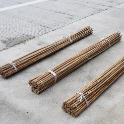 農業にかプラントサポートまたは飛ば棒使用する自然で黄色いカラーの乾燥したTonkinタケポーランド人