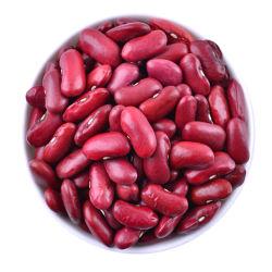 La exportación no OMG rojo púrpura Frijoles Los frijoles enlatados para