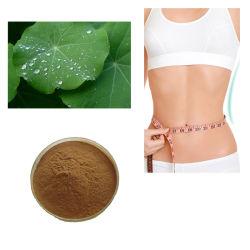 Потеря веса функция Louts экстракт листьев Nuciferine 1%-98% CAS 475-83-2