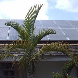 2kw het Systeem van de zonneMacht het Huis 2000W van het Systeem van het Zonnepaneel van 2 KW op de Apparatuur van het Zonnestelsel van het Net