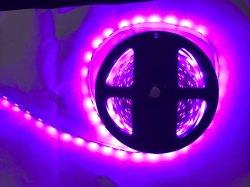 Feux de Rose 5050 bandes LED