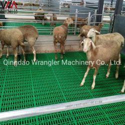 Lattes en plastique pour plancher ferme porcine/Sheep Farm/Goat Farm