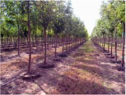 Saco de crescer preta de Batata da Plantadeira Spud Growbag pote de plantas de tomate