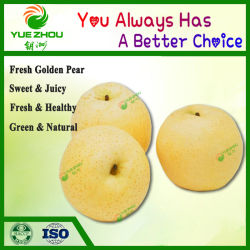 2018安い価格の販売のための新しい穀物の新しいナシの金ナシ