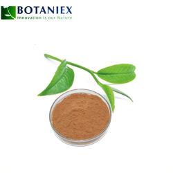 Los polifenoles del extracto de té verde L-Theanine 3081-61-6