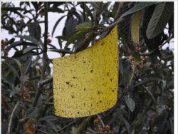 Лучший продавец импортируемых материалов с помощью клея вкус желтого цвета для полетов ловушки