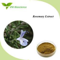 Best Selling certificadas pela ISO extrato de alecrim puros e naturais para tratamento de arteriosclerose